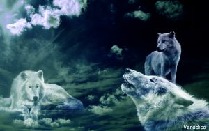 Wolf`s in the sky